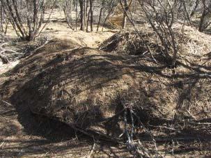 Malleefowl mound